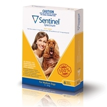 Sentinel Spectrum Dog 11-22Kg Yellow 6 Pack