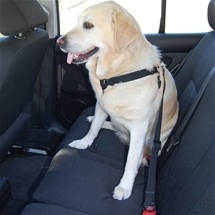 Dog Harness for Car - Large