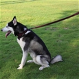 Bungee Extendable Dog Leads_HD1123_2