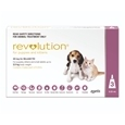 Revolution Puppy and Kitten_PFI7938_0