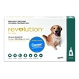 Revolution Dog_PFI7947_3