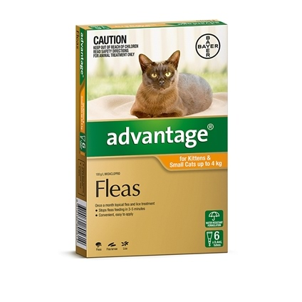 Advantage Cat 6 Pack
