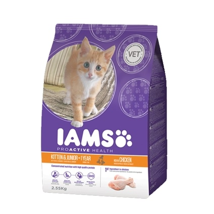 Iams Cat Kitten & Junior